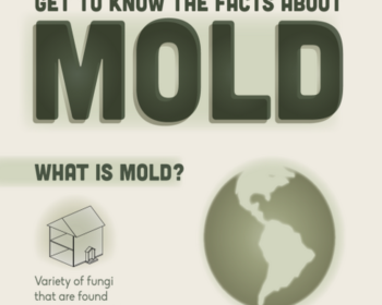 All About Mold