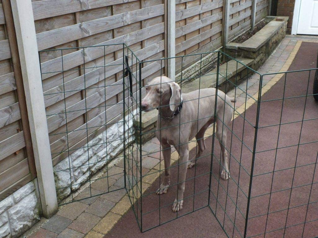 dog proofing your garden with a gate