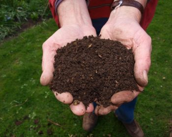 fresh healthy soil
